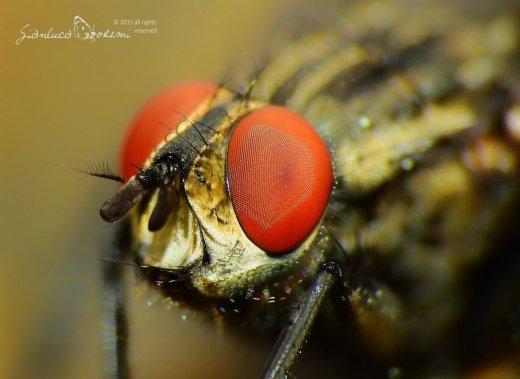 Le leggi matematiche di Turing applicate agli insetti