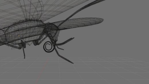 Lepidottero schematizzato. - spirotromba