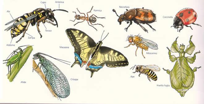 Varie specie di insetti