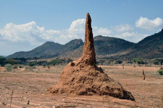 Termitaio gigante - © Tutti i diritti riservati di Palmario - isoptera