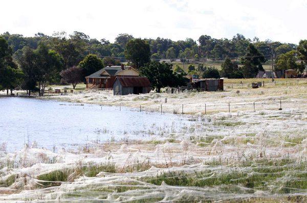 Gli effetti della pioggia di ragni