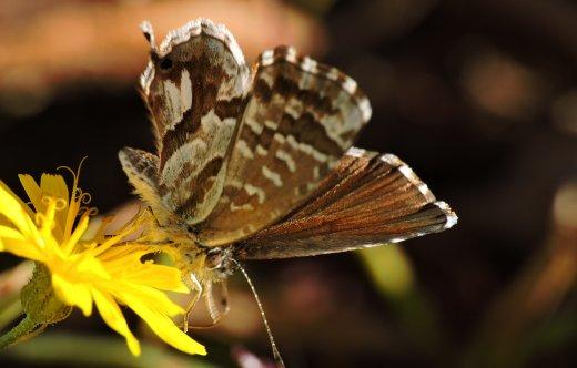 Su alcune specie di insetti alloctoni rilevati in Friuli Venezia Giulia