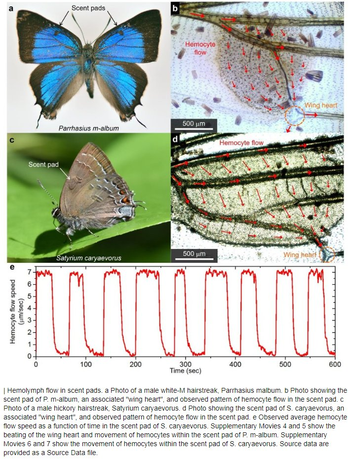 Analisi delle ali delle farfalle per evitare il surriscaldamento