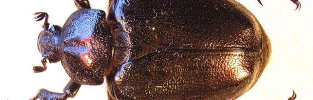 Perché dobbiamo proteggere gli insetti
