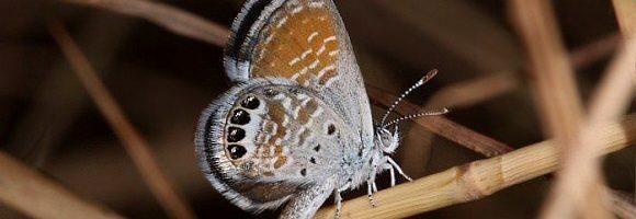 Le ali più piccole del mondo – Lepidotteri