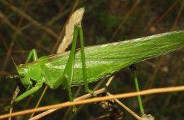 Perche gli insetti hanno sei zampe ?