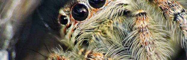Utravioletti e ragni