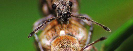 20 fatti sorprendenti degli insetti – parte 1^