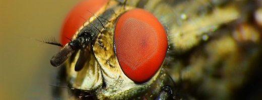 Le leggi di Turing applicate agli insetti – ARTICOLO N. 100