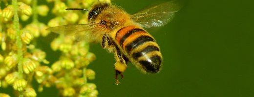 Pesticidi nel miele di tutto il mondo