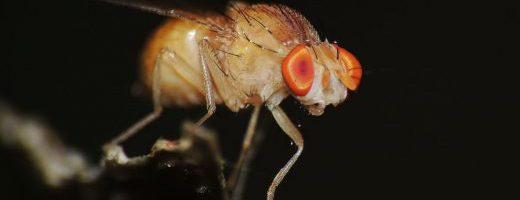 Sordità, un aiuto dagli insetti