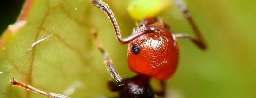 La memoria fotografica delle formiche