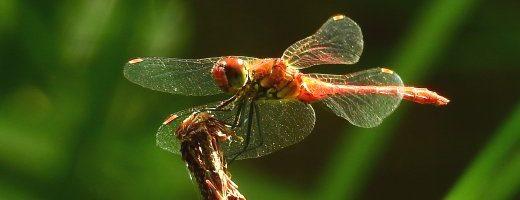 20 fatti sorprendenti degli insetti – parte 2^