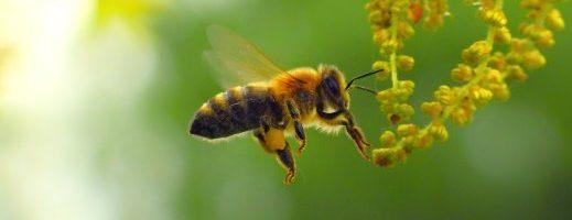 Piante e insetti, i vantaggi della collaborazione