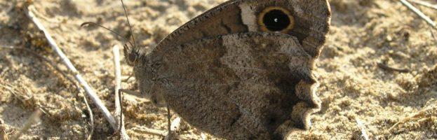 Aggiornamento del sito – dalla farfalla 370 alla falena 374