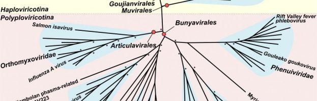 Centinaia di nuovi virus presenti negli insetti