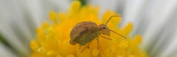 L'evoluzione della locomozione degli insetti