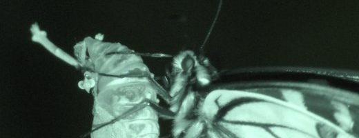 Ma gli insetti dormono?