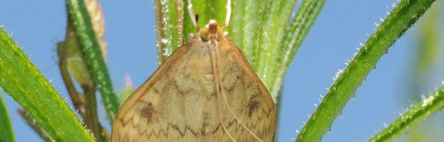 Riscaldamento, colture e insetti nocivi