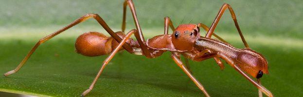 Ragno o formica?