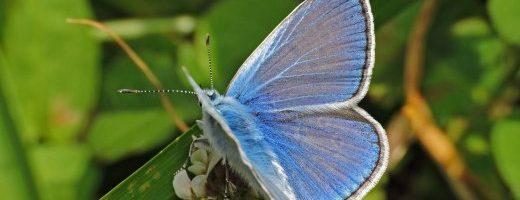 Gli effetti degli insetticidi sulle farfalle – Una revisione