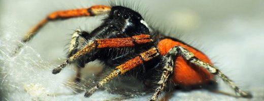 Un farmaco contro la paura dei ragni