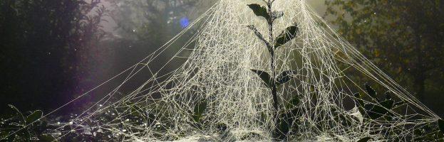 Le stesse ragnatele da due percorsi evolutivi