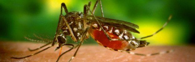 Malattie virali trasmesse dalle zanzare e potenziali candidati al vaccino che bloccano la trasmissione
