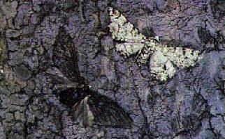 Il bluff degli animali e degli insetti – parte 1^