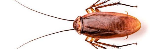 Ancora sugli scarafaggi – curiosità