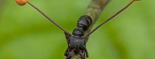 Il ritorno delle formiche zombie – la difesa