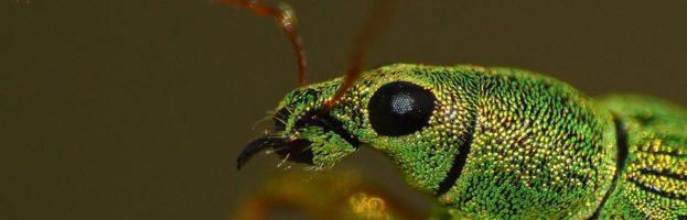 Più insetti per foreste in buona salute