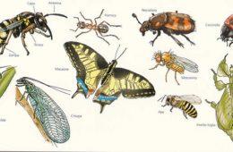 Alcune curiosità sugli insetti e altri artropodi.
